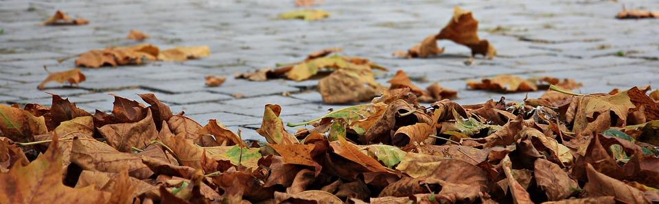 autumn-1685924_960_720