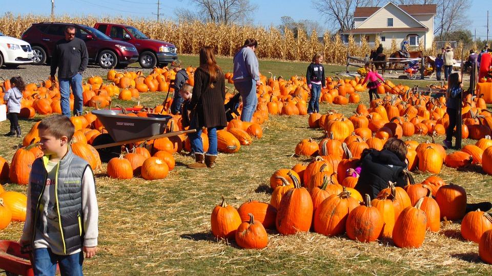 fall_pumpkin_patch