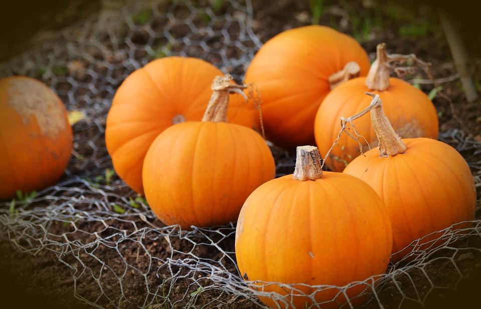 halloween-2016-pumpkins