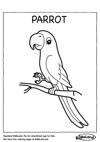 Download Free Parrot Coloring Page and educational activity ...